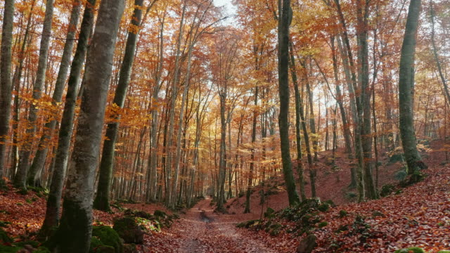 path through enchanted autumn forest - landscape video stock e b–roll