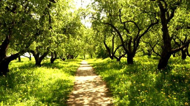Path through the park video