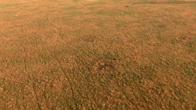 AERIAL: Paths on open short grass savannah field made by wild animals walking video
