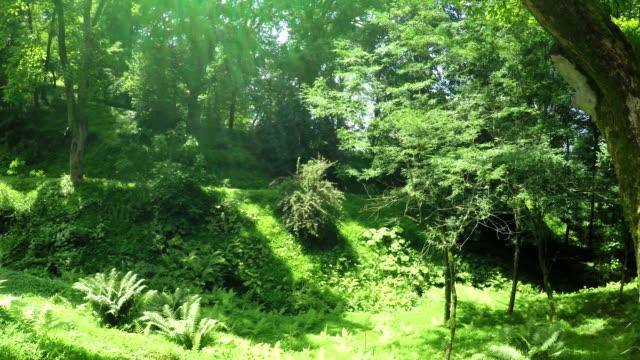 väg i parken i botaniska trädgården - designelement bildbanksvideor och videomaterial från bakom kulisserna