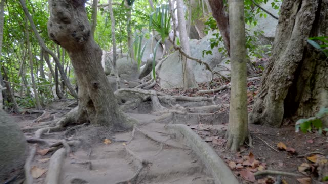 Pathway in the Jungle video