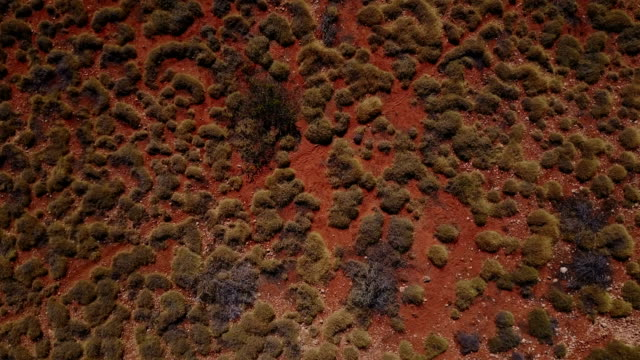 Pattern of Spinifex Grass in Australia video