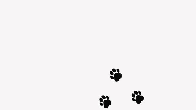 paw print. animal paw print walking. cartoon paws along the path. 4k video. - traccia video stock e b–roll