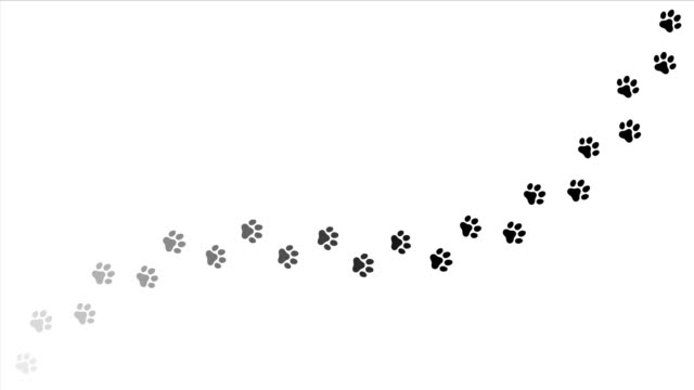 paw print animation. 4k video stock video - łapa filmów i materiałów b-roll