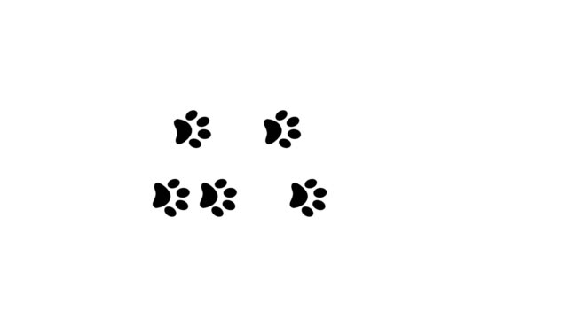 Paw prints animal feet foot footprints pawprints dog cat transition 4k Paw prints animal feet foot footprints pawprints dog cat transition 4k. printmaking technique stock videos & royalty-free footage