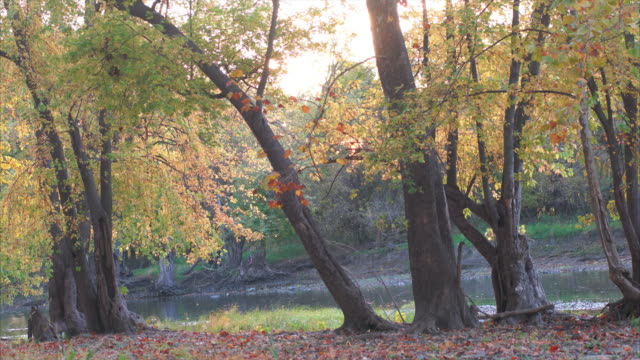 Peaceful Autumn scene, colorful trees with river flowing behind video