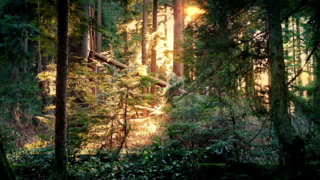 Peaceful Forest Lit Up In Afternoon Sun video