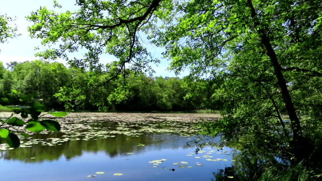 peaceful lake in summer time with water lilies and alder trees. Havelland region Germany.