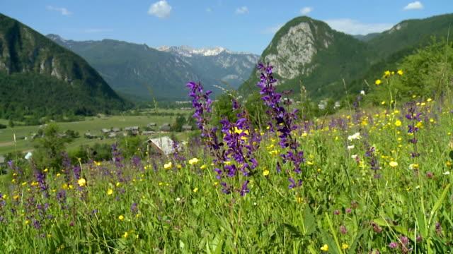 hd dolly: peaceful nature - vild blomma bildbanksvideor och videomaterial från bakom kulisserna