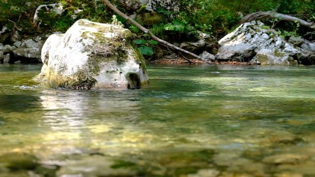 мирные воды замедленного движения - спокойная вода стоковые видео и кадры b-roll
