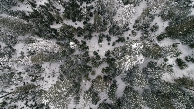 Peaceful Snow Covered Forest Trees Drone Background video