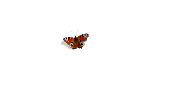 peacock butterfly flying on a green background - butterfly stock videos & royalty-free footage