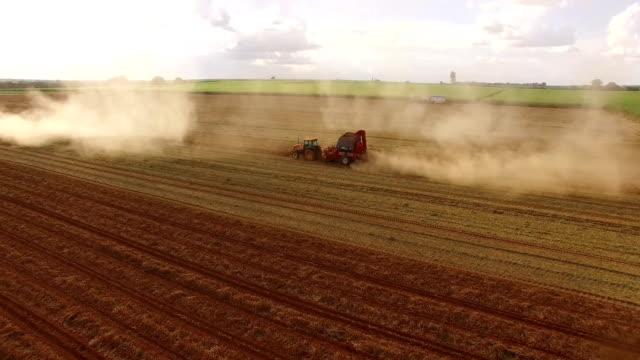 peanut plantation aerial view video