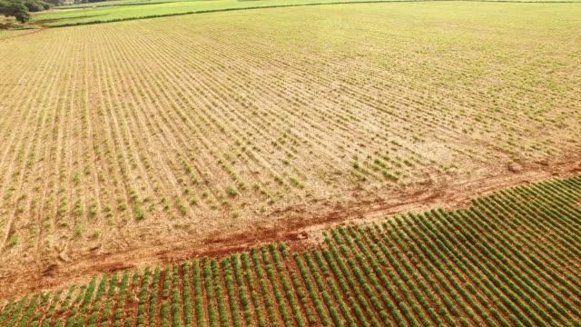 peanut plantation case study