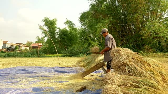 romantische getreide dreschen reis mit dreschflegel gegen holz-board - kambodschanische kultur stock-videos und b-roll-filmmaterial