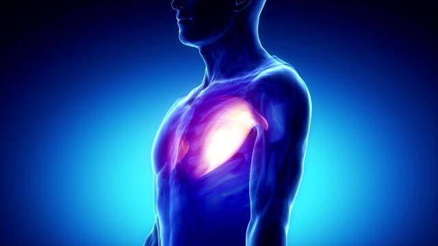 pettorale-muscolo principali-muscoli anatomia in nero - torace umano video stock e b–roll