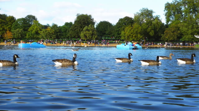Pedalo Riders On The Serpentine In London Hyde Park (UHD) video