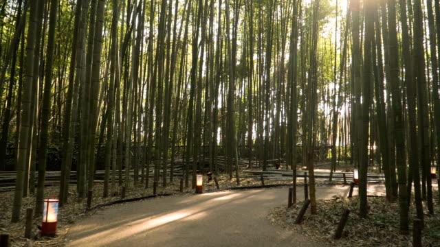 pedestrain walkway in Arashiyama Bamboo Forest in Kyoto, Japan video