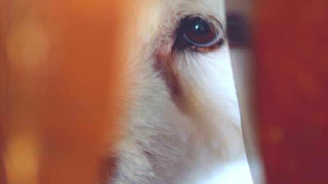 kikar - fruktan bildbanksvideor och videomaterial från bakom kulisserna