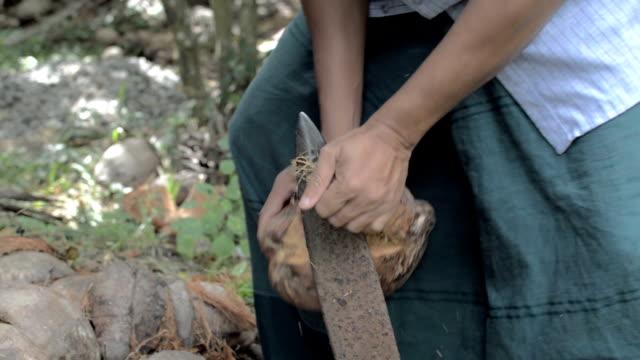 skala en kokosnöt, ta bort skalet - kokosfiber bildbanksvideor och videomaterial från bakom kulisserna
