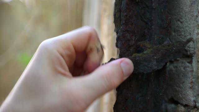 vidéos et rushes de éplucher la rouille sur le mur de briques. métaphore de la fuite - pâque juive
