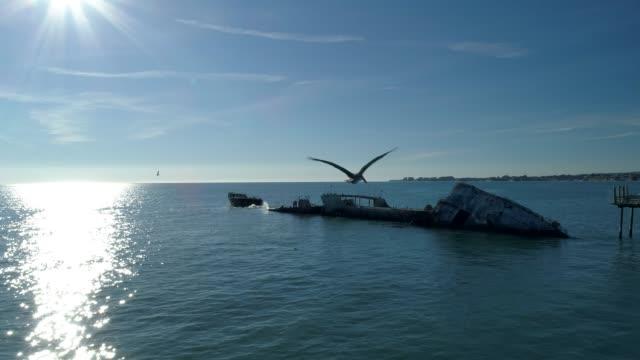 "Pelican Pelican is flying towards to abandoned concrete ship ""Palo Alto"". Seacliff Stat Beach, Santa Cruz, California. pelican stock videos & royalty-free footage"
