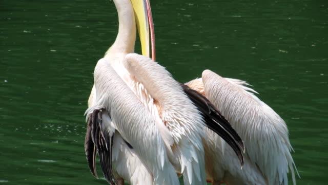 pelican - {{asset.href}} 個影片檔及 b 捲影像