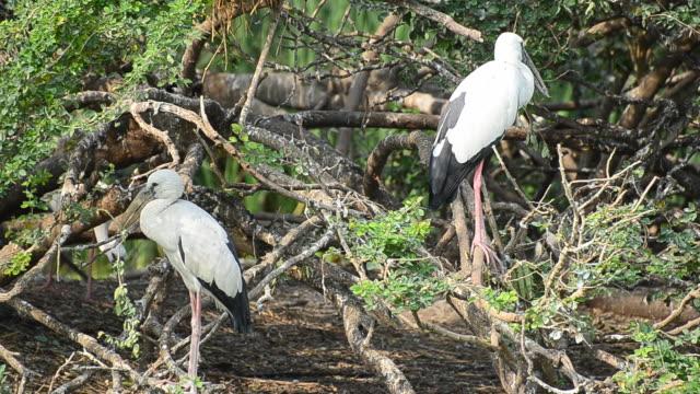 pelicans in the nature - djurlem bildbanksvideor och videomaterial från bakom kulisserna