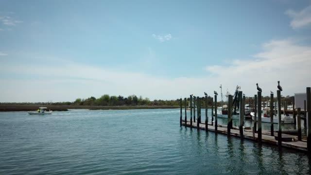 Pelicans Roosting in a Harbor