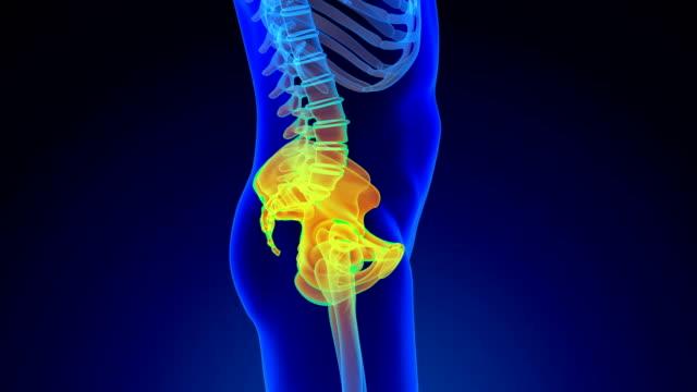 骨盤 - 動物の身体各部点の映像素材/bロール