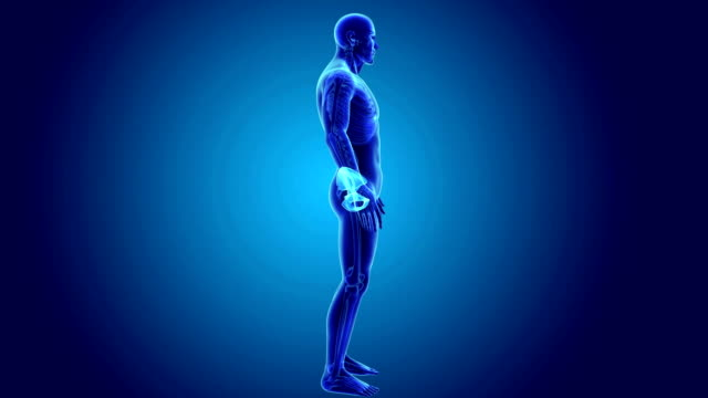 Pelvis with Skeleton Body video