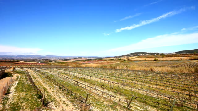 Penedes Wineyard a windy day