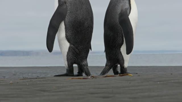 Penguin butts video