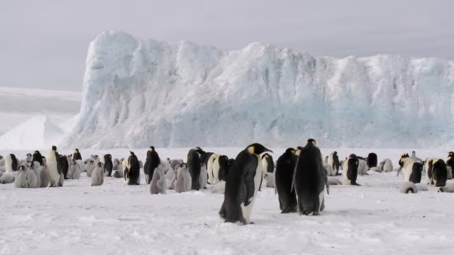 pingwin kolonia lr - antarktyda filmów i materiałów b-roll