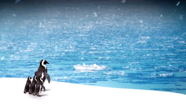 edytowane montaż-penguin rodziny. - pingwin filmów i materiałów b-roll
