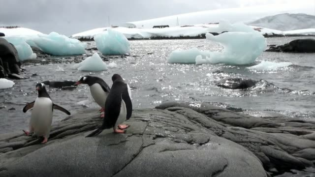 penguins on snowy rocky coast in ocean of antarctica. - ekoturystyka filmów i materiałów b-roll