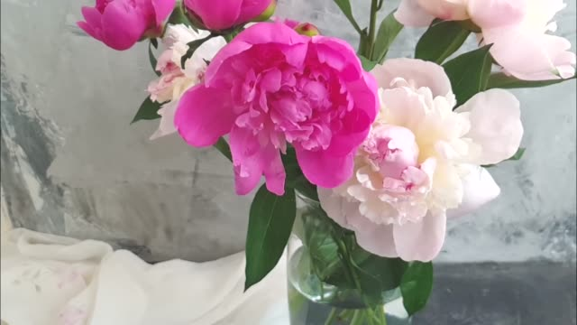 peony flower in a vase on a gray concrete background slow motion