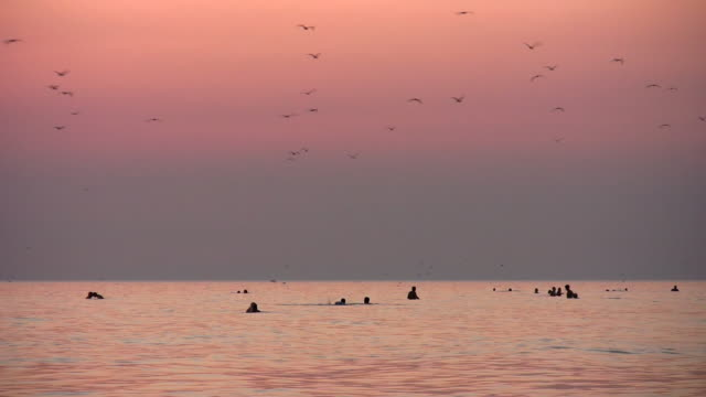 people and birds silhouette on sunset sea video