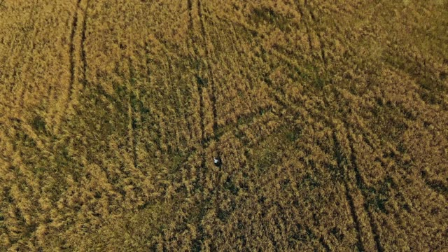 People are walking in the field. Children walk in the meadow. Aerial view video from copter. Top view.