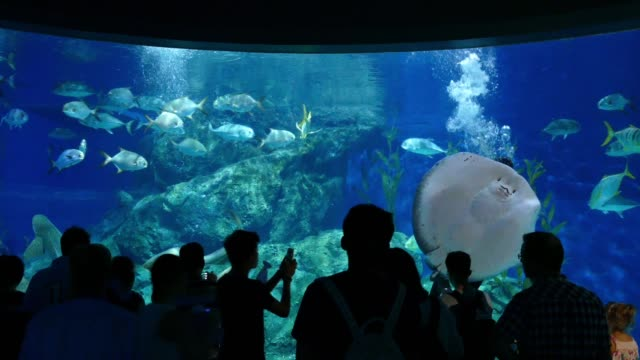 People At Aquarium Watch Divers Feeding Fish And Stingray