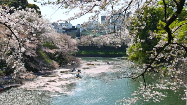 menschen feiern die kirschblüte in japan - tradition stock-videos und b-roll-filmmaterial