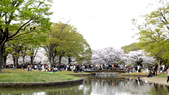 People celebrating the cherry blossom at Yoyogi park in Tokyo video