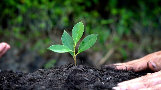 Manos las personas cuidar de brotes de árbol planta joven. - vídeo
