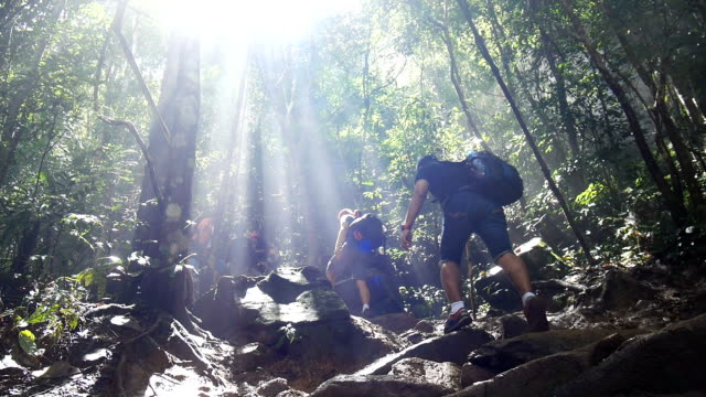 People hiking in tropical jungle forest video