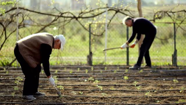 vídeos de stock, filmes e b-roll de pessoas enxadas do solo, mãos plantando mudas verdes, jardinagem comunitária, jardinagem urbana, agricultura urbana, loteamentos, agricultura urbana, jardim sustentável, irrigação por gotejamento - terra cultivada