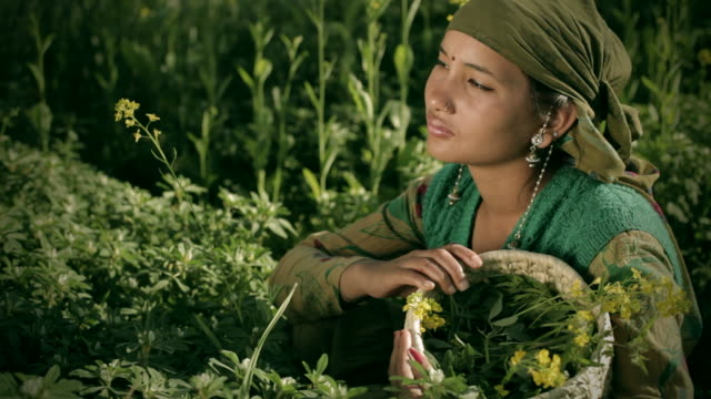 People of Himachal Pradesh: young rural woman in green farm video