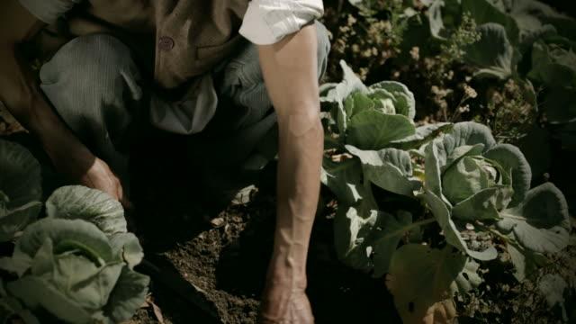 ネパール人。草取りな農家のキャベツファームます。 - ネパール人点の映像素材/bロール