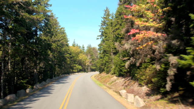 POV: People on road trip driving through country road stretching through forest video