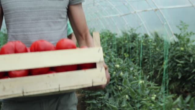 People on vegetable farm video