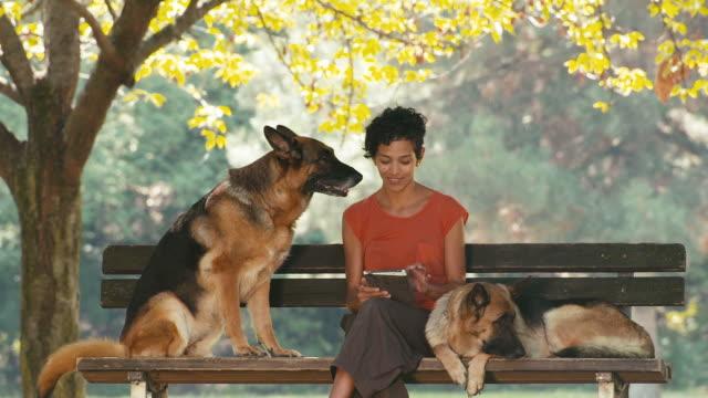vídeos y material grabado en eventos de stock de personas, mascotas, perro sitter con alsatian perros en el parque - animales de granja